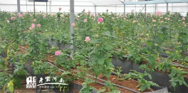6 2017鄢陵 花都之春 系列旅游活动