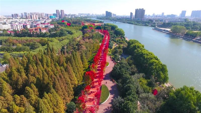 漯河:金秋枫叶红,醉在沙澧河