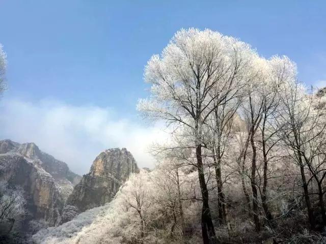 新乡南太行:雾凇有奇景,天然去雕饰