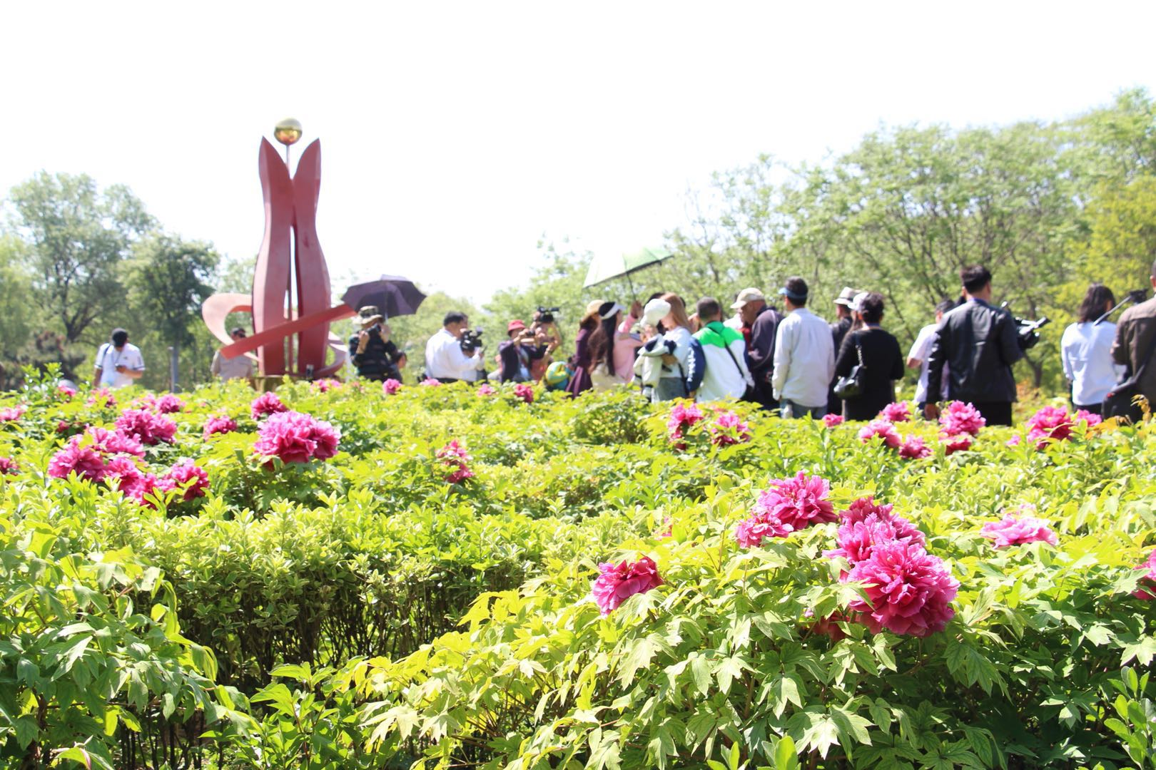 缤纷芍药 七彩洋伞 五一小长假来鄢陵中原花木博览园赏万种风情
