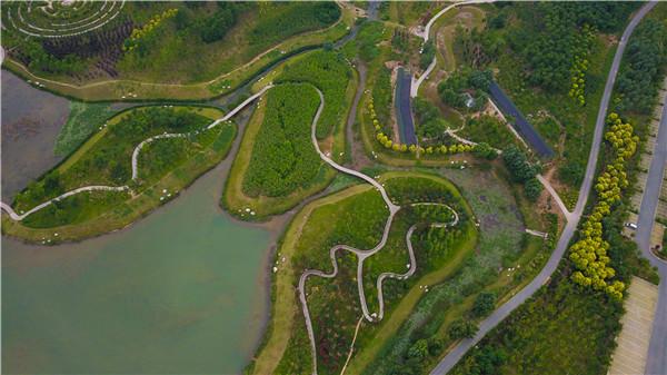 6月22日,俯瞰鹤壁市淇河国家湿地公园,河水碧绿,树木葱茏.