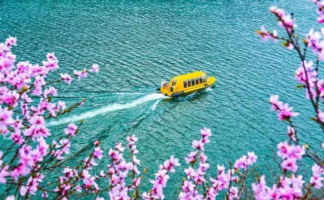 青天河的春天,从十万亩桃花开始!