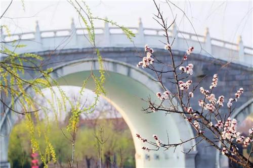 杏花微雨里,和清明上河园谈一场关于春天的恋爱