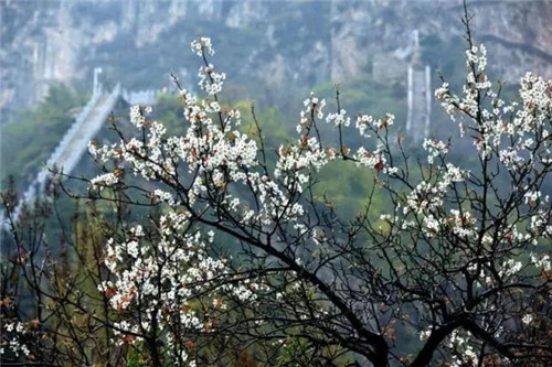 美景如画 新乡辉县轿顶山景区向您发出春的邀约!