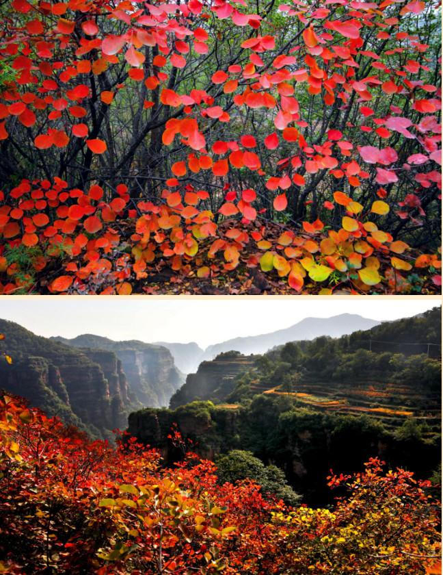 与秋色渲染的太行大峡谷,来一次美好的邂逅!